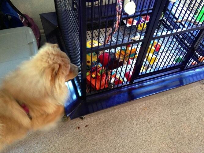 Fiction Furbaby: Meet Piper from Charm Me by Tena Stetler @tenastetler @RobsRescues #RLFblog #PNR #Pets